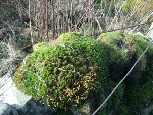 Flourishing lichens and mosses